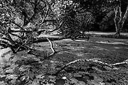LUNUGANGA.<br /> Pond and single lotus