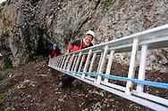 Grad students Solveig Nilsen and Dagfinn Breivik Skomsø carry ladder along sheer cliffs of kittiwake colony to do field research on Blomstrand island; Kongsfjorden, Svalbard.