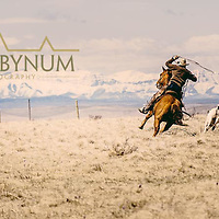 cowboy chasing a calf while swinging his rope dog chasing