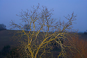 tree branches during winter time