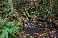 A small waterfall along Duck Creek is lined with fallen fall leaves.  Photographed at Duck Creek Park on Salt Spring Island, British Columbia, Canada.