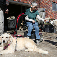 Lauren Wood | Buy at photos.djournal.com<br /> Patty Aguirre demonstrates how her service dog Shai helps remove a glove as her husband Bart and other dog Rani stand nearby Friday afternoon at their Tupelo home. Patty has been training Rani to become a therapy dog as well.