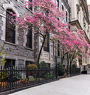 NYC-spring