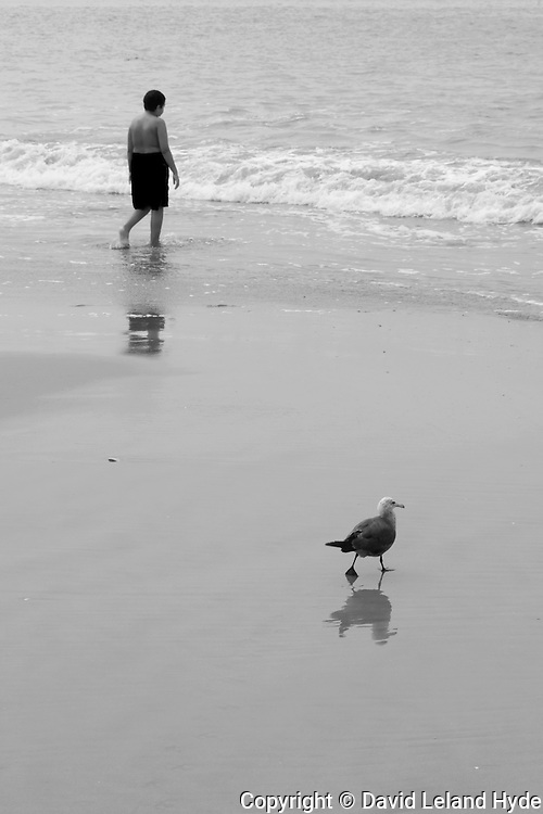 Walking Into the Ocean with Seagulls, Santa Cruz, California Beaches, Sant Cruz County