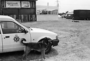 Jed the dog by a police car, Glastonbury, Somerset, 1989