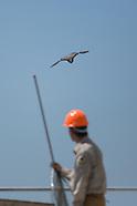 falcon tagging - 6.10.15