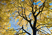 Detail of Autumn Foliage in Central Park, New York City.