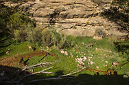 Grand Canyon National Park, South Rim, mule deer near Garden Creek, Arizona
