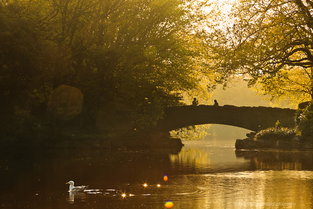 Dublin. Ireland: The Warm glow of the setting sun illuminates the foliage and glistens on the watewr in the lake at the centre of this Dublin City Park