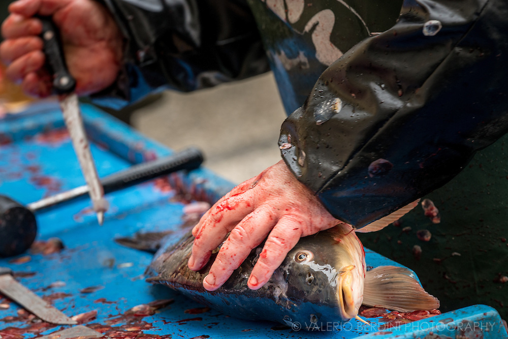 After being hit, a fishmonger slits carp's throat causing its death.