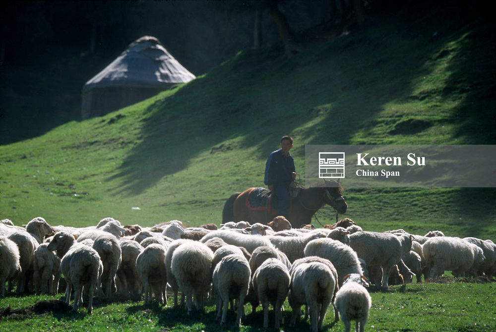 Kazakh man herding sheep on Southern Pastures, near Urumqi, Xinjiang Province, Silk Road, China