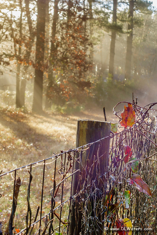 Foggy fall fence in the morning.