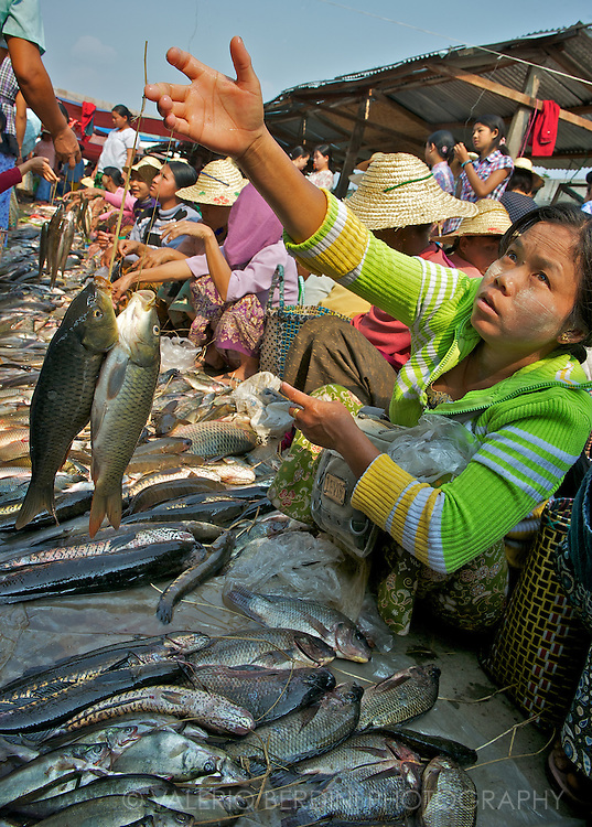 Fresh fish is sold every morning at the market. The rotating market around the Inle Lake visit villages in a 5 days turnaround.