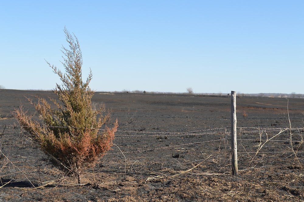 Post fire management. pasture and grassland that has been burned by fire can be beneficial in the long run with some simple management tips or tools. This pasture north of Stillwater will return and perhaps be better than before.