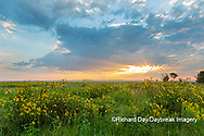 63893-03716 Sunrise and prairie Prairie Ridge State Natural Area Marion Co. IL