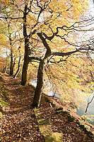 country lakeside path by Anglezarke reservoir in Lancashire. Autumn woodland