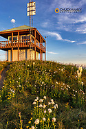 Summer wildflowers at Werner Peak Fire Lookout near Whitefish, Montana, USA