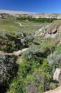 Dinosaur Provincial Park in an area known as the Badlands, Alberta, Canada.