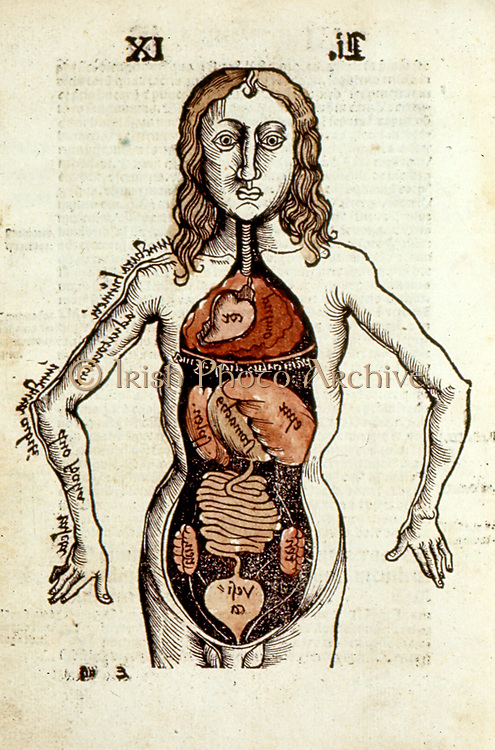 Internal organs of the human body.  From Gregor Reisch 'Margarita Philosophica', Basle, 1508.