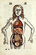 Internal organs of the human body.  From Gregor Reisch 'Margarita Philosophica', Basle, 1508.