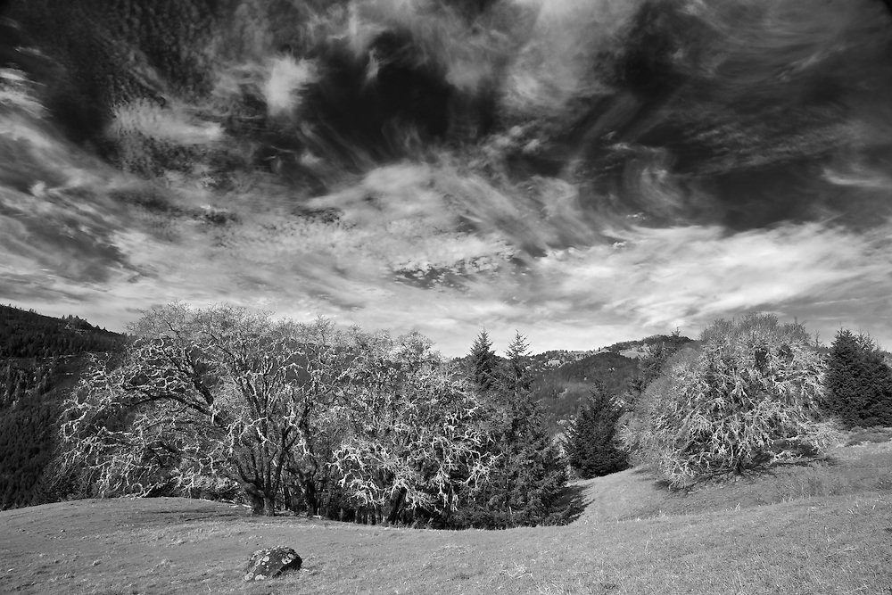 I was raveling through the far northern part of California near Fortuna, and experienced these amazing wispy cirrus clouds. I pulled over alongside this cow pasture to capture the majestic scene before me.