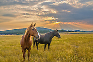 Two horses graze on a ranch in rural Montana. Crepuscular Rays were shining in the background as it approached sunset. The sneaky horse on the left kept trying to steal food from my backpack when I wasn't looking. He left slobber all over my bag but at least they gave a good pose for this one picture.