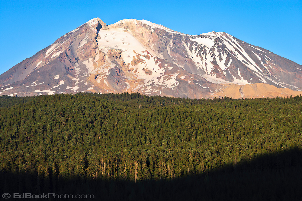 A coniferous forest in the Gifford Pinchot National Forest stands in the foreground against a backdrop of the southwest side of Mount Adams rock, snow, and Ice - Washington state, USA