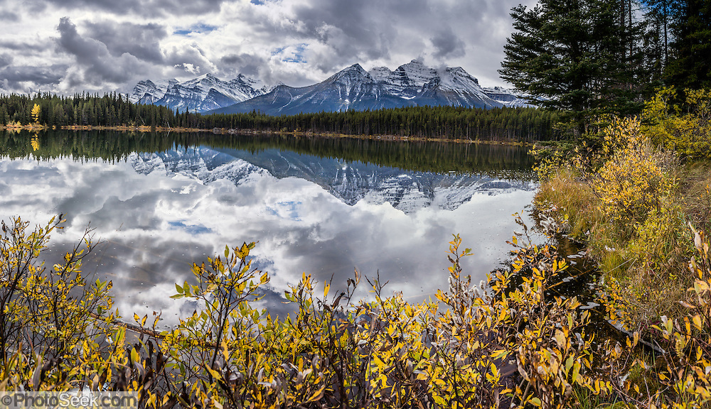 Peaks of the Bow Range reflect in Herbert Lake, Canadian Rockies, Banff National Park, Alberta, Canada. Foreground fall color foliage turns yellow in mid September. Banff National Park is Canada's oldest national park, established in 1885, and is part of the Canadian Rocky Mountain Parks World Heritage Site declared by UNESCO in 1984. This panorama was stitched from 4 overlapping photos.