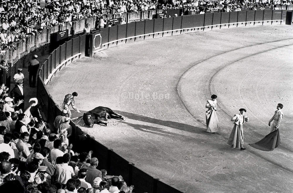 matador making the final kill of a bull