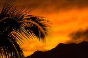 sunset, coconut palm tree