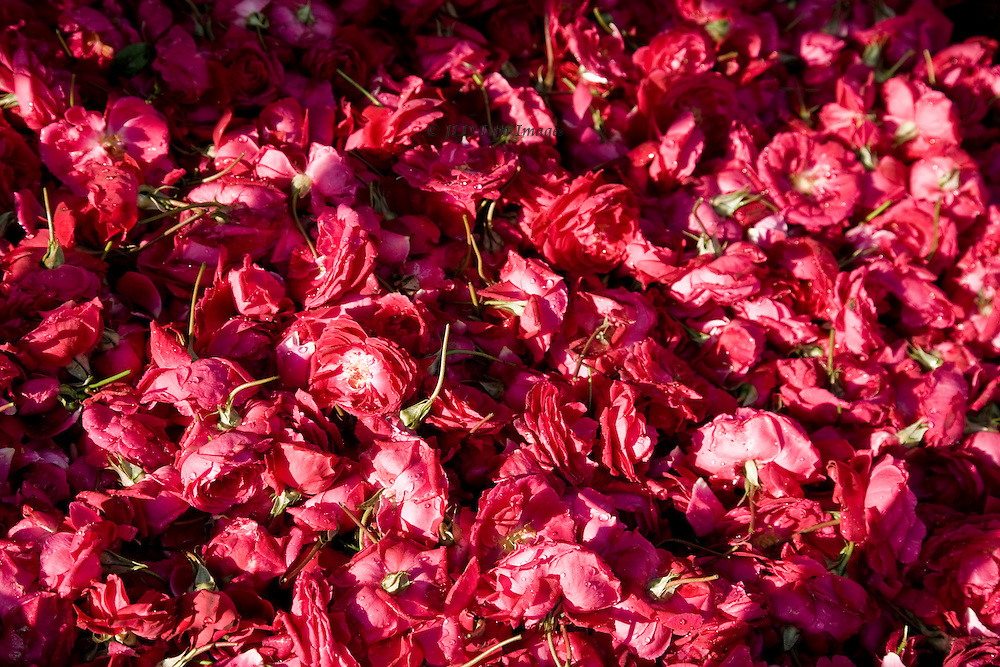 Basket of rose petals and blooms offered for sale At the shrine to Bava Gor (Baba Ghaur) near Limbodra, Gujarat.