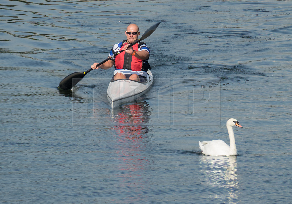 © Licensed to London News Pictures. 02/09/2017. Hampton Court, UK. A canoeist passes a swan on the River Thames near Hampton Court. A period of warmer weather is predicted over the next few days after the recent wet spell. Photo credit: Peter Macdiarmid/LNP