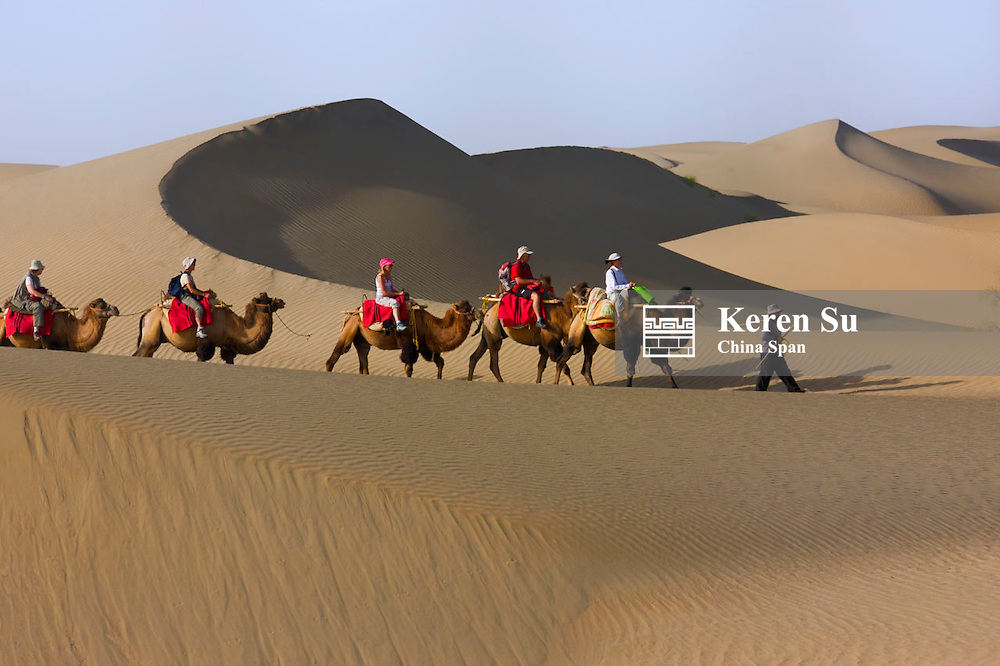 Camel caravan with sand dune in the desert, Aksu, Xinjiang, China