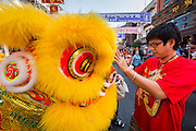 31 JANUARY 2014 - BANGKOK, THAILAND:   A man strokes the brow of a Chinese Lion dancer during Lunar New Year festivities, also know as Tet and Chinese New Year, in Bangkok. This year is the Year of the Horse. The Lion Dance scares away evil spirits and brings prosperity and luck. Ethnic Chinese make up about 14% of Thailand and Chinese holidays are widely celebrated in Thailand.     PHOTO BY JACK KURTZ