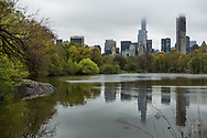 Spring greens at the Lake in Central Park