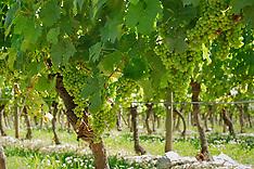 Vignes et vins