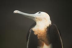 Galapagos #3 2014