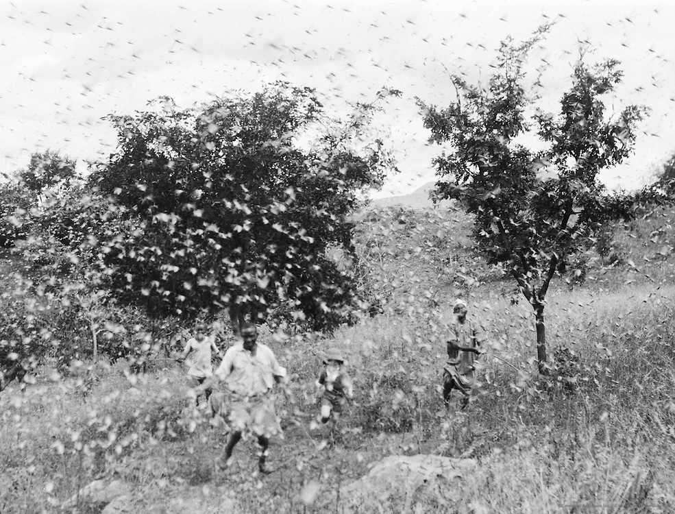 Swarm of Locusts, Tanga, Tanganyika (now Tanzania), Africa, 1937