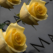 On the 15th anniversary of 9-11 at Ground Zero, yellow rose was placed on the memorial plagues  by a loved ones by the name of a family member who died that day.<br /> <br /> The 2,983 names of the victims of the attacks of Sept. 11, 2001, and Feb. 26, 1993, World Trade Center truck bombing are inscribed into bronze parapets surrounding the twin memorial pools.