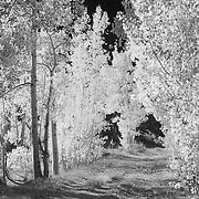 North Lake Road Vertical - Infrared Black & White