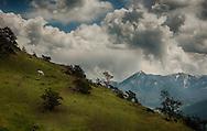 Horse grazing, storm, clouds, Absaroka Mountains, Livingston Peak, outside Livingston, Montana