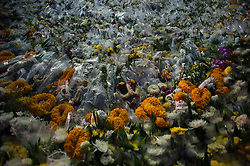 October 22, 2016 - Bangkok, Thailand - A flowers as mourner for late Thai King Bhumibol Adulyadej outside the Grand Palace in Bangkok, Thailand, on October 22, 2016. King Bhumibol, the world's longest reigning monarch, died at the age of 88 in Siriraj Hospital in Bangkok on 13 October 2016. (Credit Image: © Anusak Laowilas/NurPhoto via ZUMA Press)