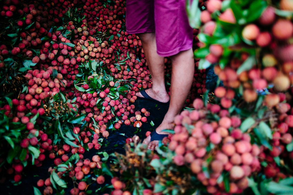 A lychee farmer at a local market in Lao Cai, northern Vietnam.
