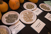 WINTER SQUASH, Cucurbita spp. Researcher: Alex Stone, Oregon State University<br />