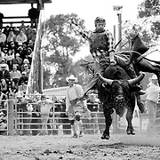 Augusta, Montana Rodeo 2011