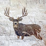 North American Wildlife