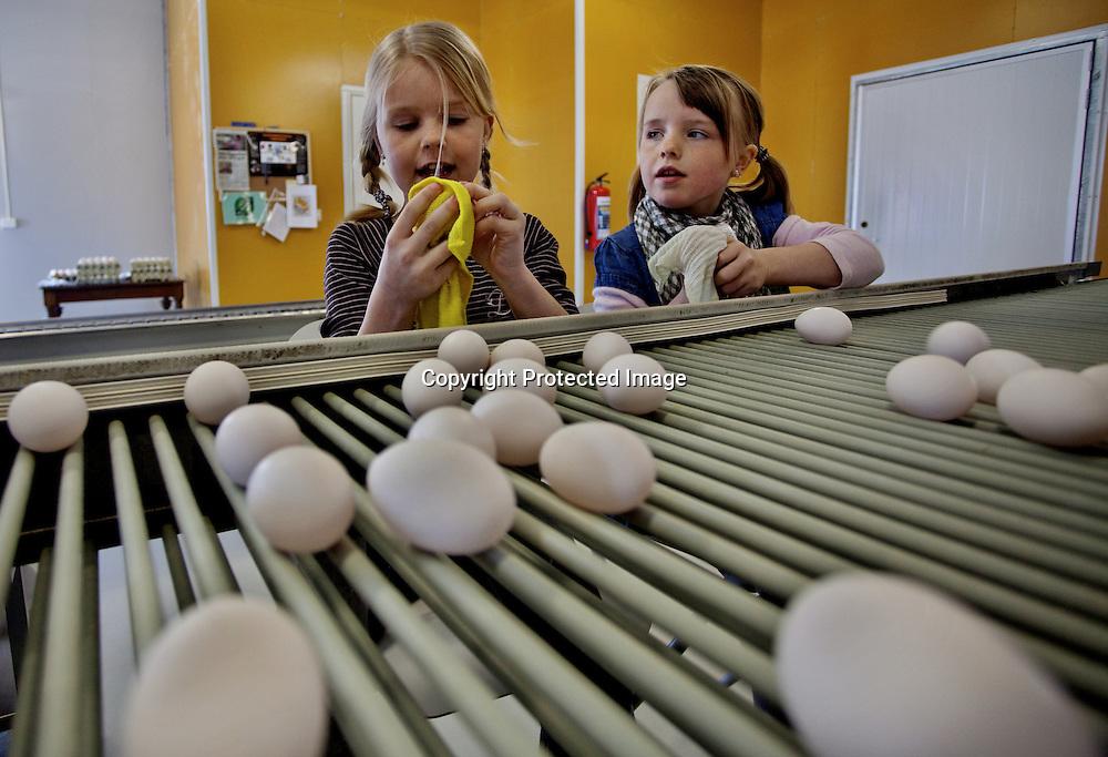 26032009, Totenvika. EGGRENS: Fra venstre Marthe (9) og Vilde (7) grovsorterer og tørker skitne egg før de sendes videre til eggpakkeriet på Lena...Foto: Daniel Sannum Lauten/VG