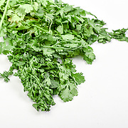 Fresh and organic Coriander (Coriandrum sativum) on white background