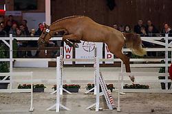 095, Cazan van het Schaeck Z<br /> Hengstenkeuring BWP - Lier 2018<br /> © Hippo Foto - Dirk Caremans<br /> 20/01/2018