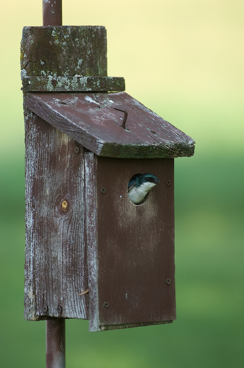 Bird peaking out of bird House - Reading PA